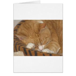 Taco the Siesta Cat Greeting Card