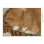 Taco the Siesta Cat Greeting Cards