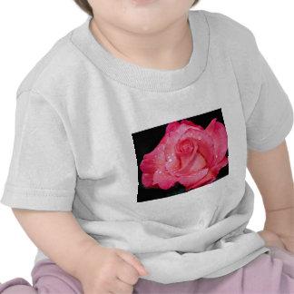 Tacto del rosa de té híbrido de la clase camiseta