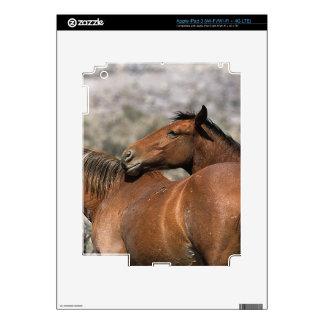 Tacto salvaje de los caballos del mustango iPad 3 skins