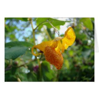 Tacto-yo-No Wildflower anaranjado Tarjeta Pequeña