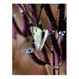 Tactos incluso la flor más pequeña postal