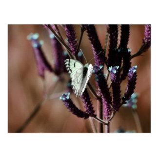 Tactos incluso la flor más pequeña tarjetas postales