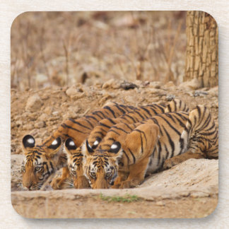 Tadoba Andheri Tiger Reserve Drink Coaster