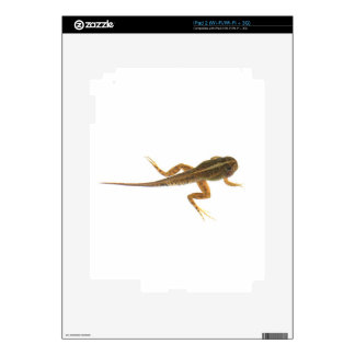 Tadpole Calcomanías Para iPad 2