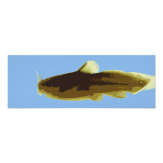 Tadpole Madtom Catfish Poster