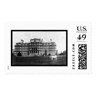 Taft's Cow Grazing near the War Building 1909 Postage