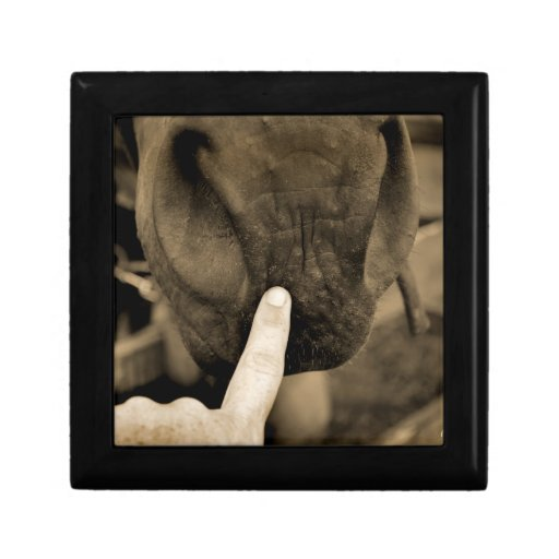 tag your it finger on muzzle horse sepia gift boxes