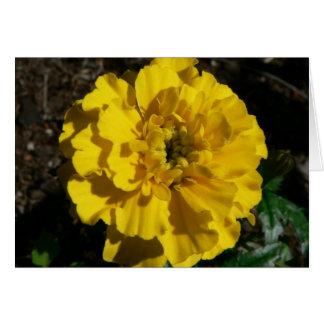 Tagetes amarillo tarjeta de felicitación