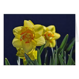 Tahiti Daffodils Card