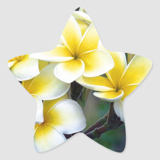 Tahitian Flowers Star Sticker