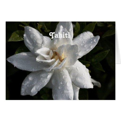 Tahitian Gardenia Greeting Cards