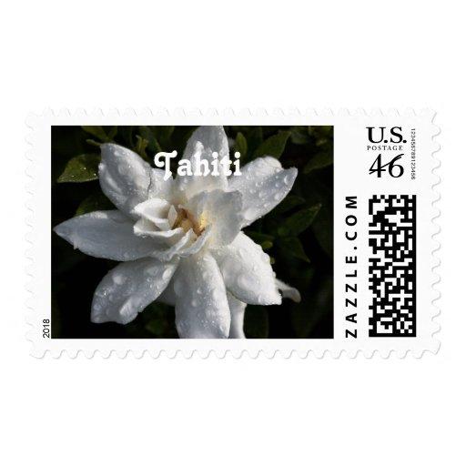 Tahitian Gardenia Postage Stamp