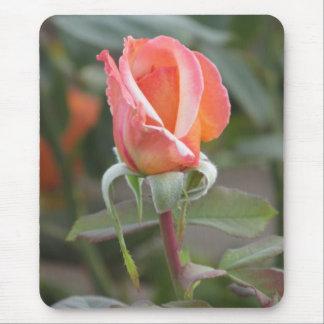 Tahitian Sunset Orange Rose Mousepad