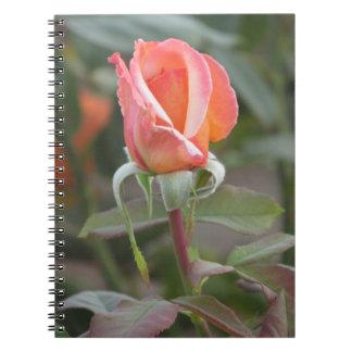 Tahitian Sunset Orange Rose Notebook