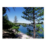 Tahoe National Forest - California Postcard
