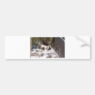 Tai Shan and Mei Xiang, giant panda bears Bumper Sticker