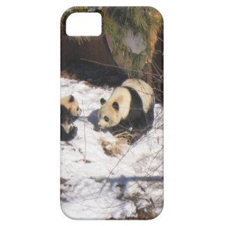 Tai Shan and Mei Xiang, giant panda bears iPhone 5 Cases