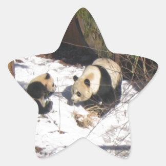 Tai Shan and Mei Xiang, giant panda bears Sticker