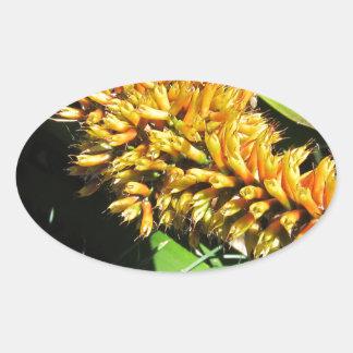 Tail Bromeliad Oval Sticker