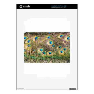 Tail feathers of male peacock iPad 2 decal