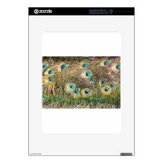 Tail feathers of male peacock iPad skin