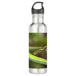 Tail Jay Butterfly Water Bottle 24oz
