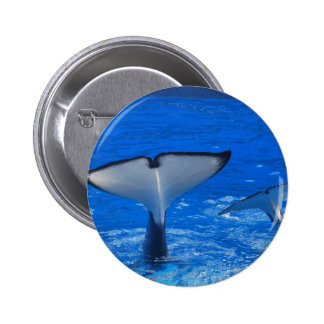 Tail of a Whale Button