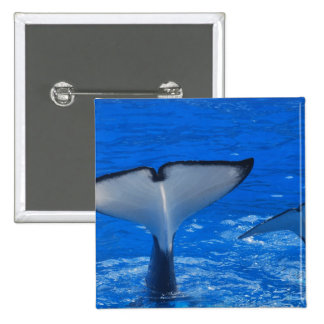 Tail of a Whale Pin
