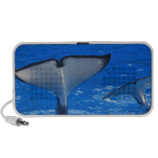 Tail of a Whale  Portable Speakers