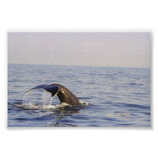 Tail of a Whale Poster