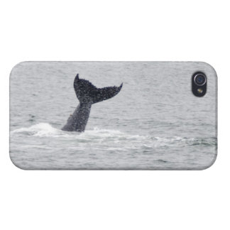 Tail of the Whale iPhone 4 Covers