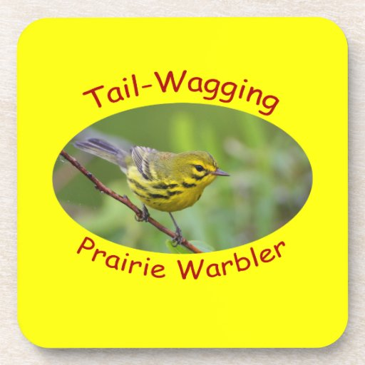 Tail-wagging prairie warbler coasters