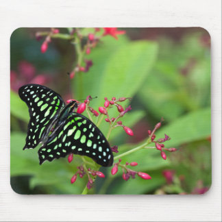Tailed Jay butterfly Mouse Pad