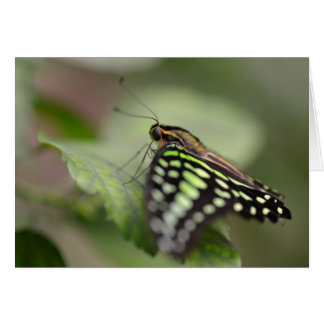 Tailed jay butterfly on leaf card