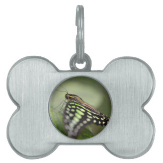 Tailed jay butterfly on leaf pet ID tag