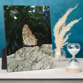 Tailed Jay Butterfly Plaque