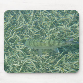 Tailing Bonefish Mouse Pad