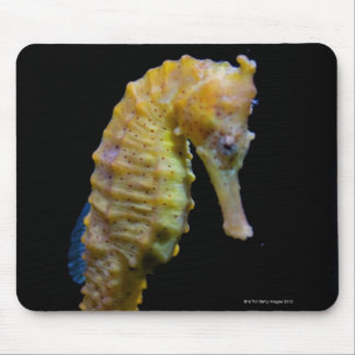 taillong shapeprehensile del swimmerequine vertica alfombrillas de ratones