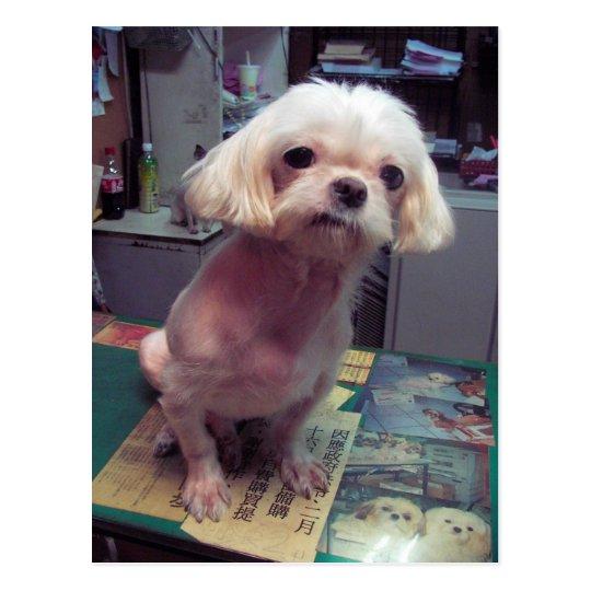 Taipei DOG Postcard