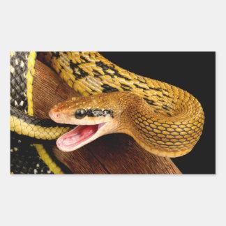 Taiwan Beauty Snake. Rectangular Sticker