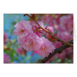 Take a deep breath pink cherry blossoms greeting card