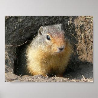 Take a Peek Squirrel Poster