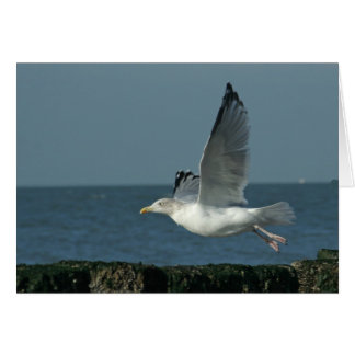 take off....to fly! greeting card