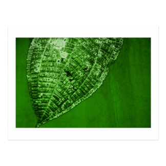 take out leaf postcard