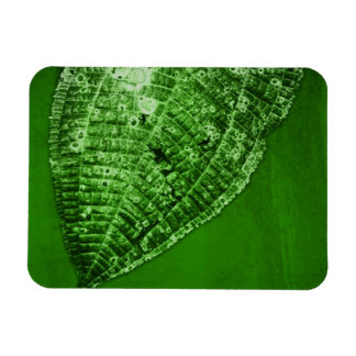 take out leaf rectangular photo magnet