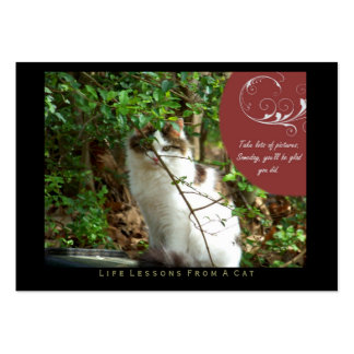 Take Pictures Life Lessons from a Cat ACEO Cards Business Cards