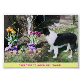 TAKE TIME TO SMELL THE FLOWERS -COLLIE PUP POSTER