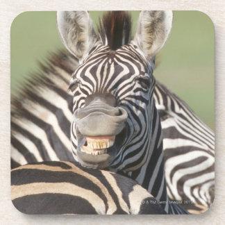 Tala Private Reserve, Kwazulu Natal, South Drink Coaster