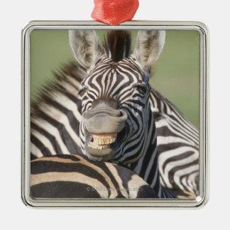 Tala Private Reserve, Kwazulu Natal, South Metal Ornament